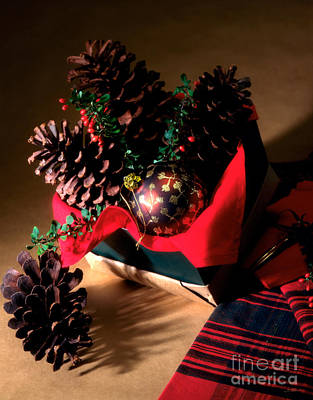 Natura Photograph - Pinecones Christmasbox by Iris Richardson