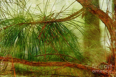 Photograph - Pinelands by Judi Bagwell