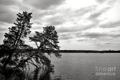 Pine Barrens Photograph - Pinelands Memories by Olivier Le Queinec