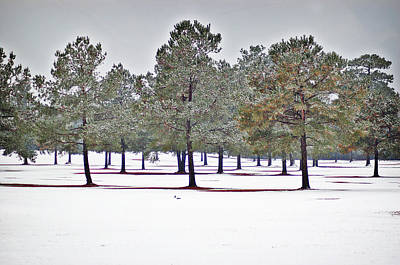 Photograph - Pines And Snow by Linda Brown