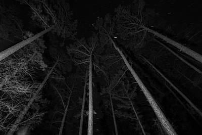 Photograph - Pines And Stars by Nathan Hillis
