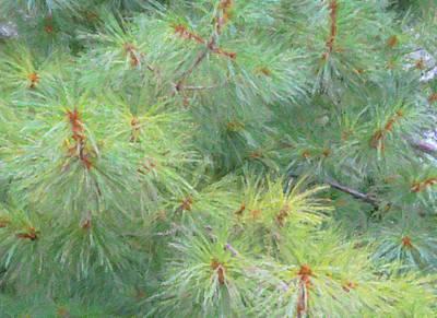 Photograph - Pines - Digital Painting Effect by Rhonda Barrett
