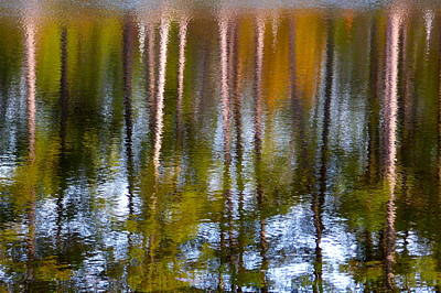 Photograph - Pines In The Lake by Jean Wright
