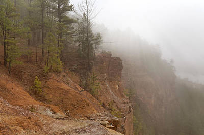 Photograph - Pines In The Mist - Emerald Park - Arkansas by Jason Politte