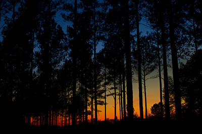 Photograph - Pines In The Sunset by Dan Wells