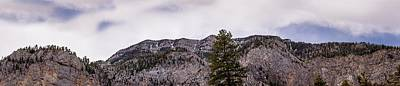 Photograph - Pines On The Mountain by  Onyonet  Photo Studios