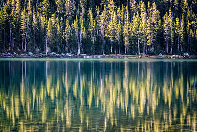 Pines Reflected In Tenaya Lake Art Print