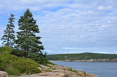 Photograph - Pines Under Furrowed Sky by Lynda Lehmann