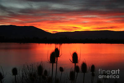 Photograph - Pineview Dawn by Bill Singleton