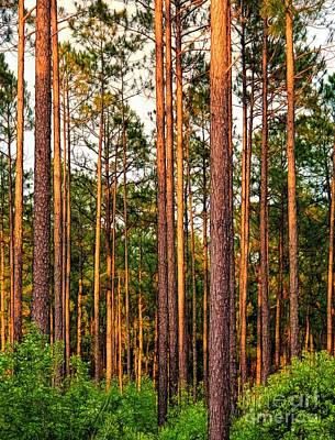 Photograph - Pinewoods by Judi Bagwell