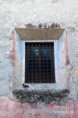 Bar San Miguel Photograph - Pingeon At Window by Oscar Gutierrez