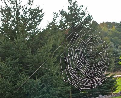 Photograph - Pining For The Web by Randy Rosenberger