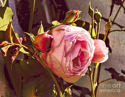Photograph - Pink 1 by Leif Sohlman