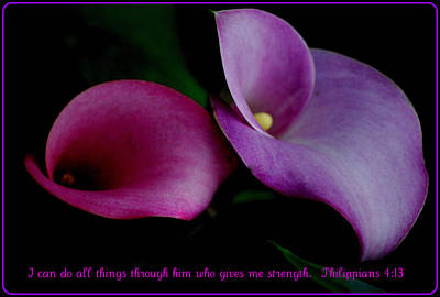 Photograph - Pink An Purple Calla Lilys by Kathy Sampson