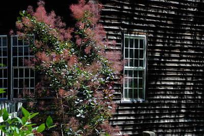 Photograph - Pink And Black - Sturbridge by Jacqueline M Lewis