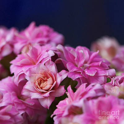 Nature Photograph - Pink And Blue II by Pamela Gail Torres