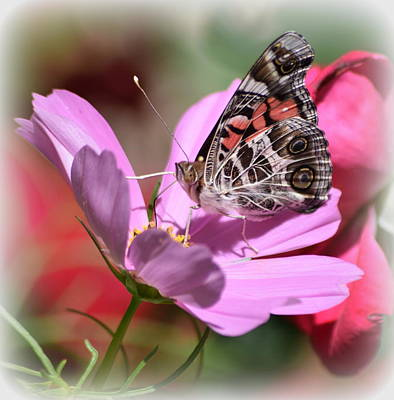 Photograph - Pink And Brown Butterfly 1 by Sheri McLeroy