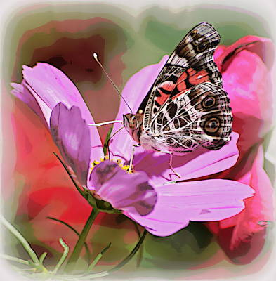 Photograph - Pink And Brown Butterfly 2 by Sheri McLeroy