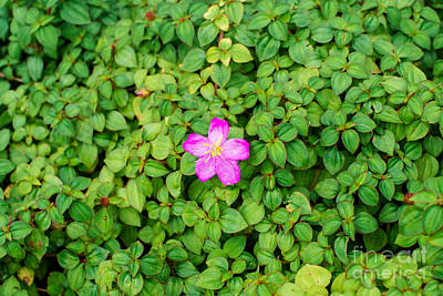 Pink And Green Original