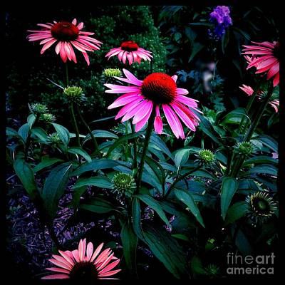 Frank J Casella Royalty-Free and Rights-Managed Images - Pink and Orange Catchy Colors by Frank J Casella