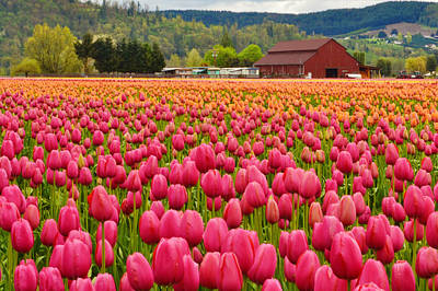 Photograph - Pink And Orange  Fields by Ansel Price