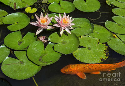 Pond Gardens Photograph - Pink And Orange by Jamie Pham