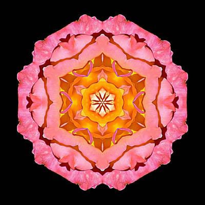 Pink And Orange Rose I Flower Mandala Art Print
