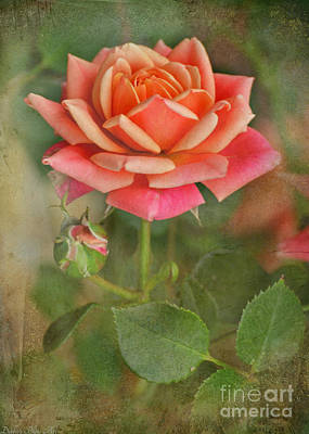 Photograph - Pink And Peach Perfection by Debbie Portwood