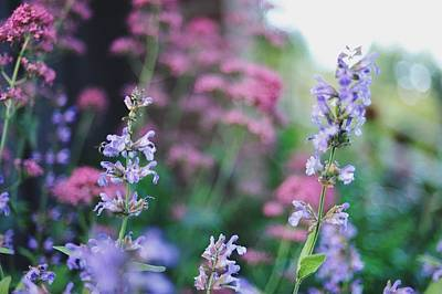 Photograph - Pink And Purple Flowers by Carlina Teteris