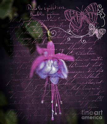 Photograph - Pink And Purple Fusicha  by Karen Lewis