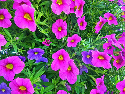 Photograph - Pink And Purple Petunias by Aimee L Maher Photography and Art Visit ALMGallerydotcom