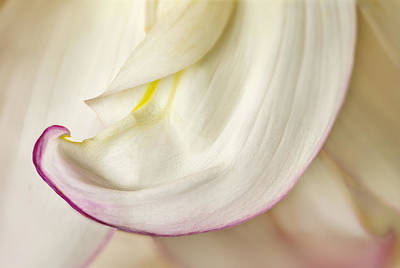 Photograph - Pink And White Curve by Mary Jo Allen