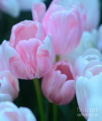 Pink And White Tulips Art Print by Kathleen Struckle