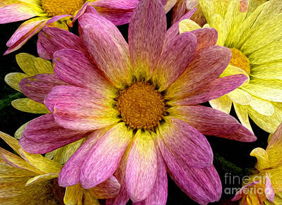 Photograph - Pink And Yellow Mums by Jim And Emily Bush