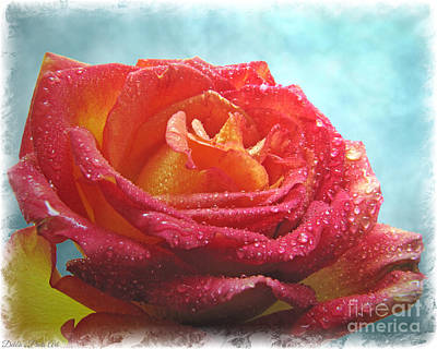 Photograph - Pink And Yellow Rose With Dew II  by Debbie Portwood