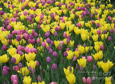 Photograph - Pink And Yellow Tulips by Kathie Chicoine