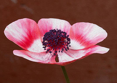 Photograph - Pink Anemone Center by Rebecca Cozart