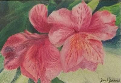 Drawing - Pink Azalea by Joan Garverick
