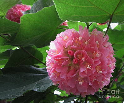 Photograph - Pink Ball Tree by Kathie Chicoine