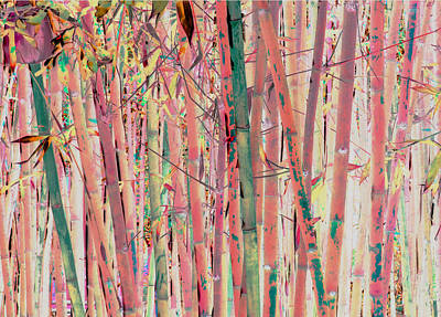 Photograph - Pink Bamboo by Stephanie Grant