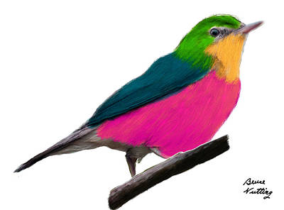 Bird Painting - Pink Belly Warbler by Bruce Nutting