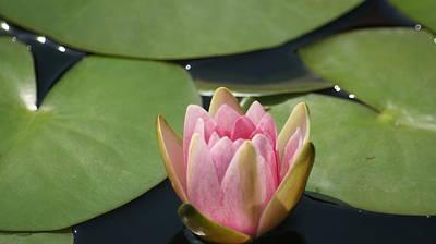 Splashing Etc Photograph - Pink Bloom by Rob Luzier