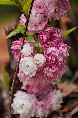 Landscapes Kadek Susanto - Pink Blooms by Photos By  Cassandra