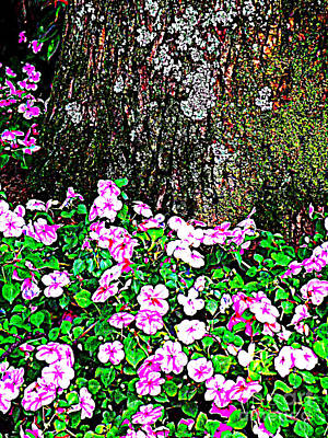 Photograph - Pink Blooms In The Forest by Miriam Danar