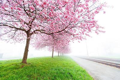 Pink Blossom On Trees Art Print