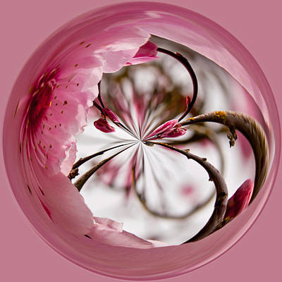 Photograph - Pink Blossom Orb by Tikvah's Hope
