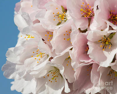 Photograph - Pink Blossoms-6 by Dale Nelson