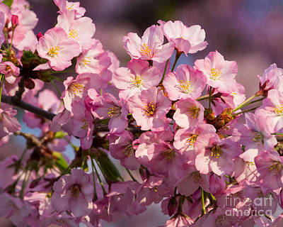 Photograph - Pink Blossoms by Dale Nelson