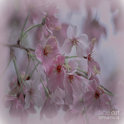 Photograph - Pink Blossoms - Duvet Cover Sized by Scott Hervieux