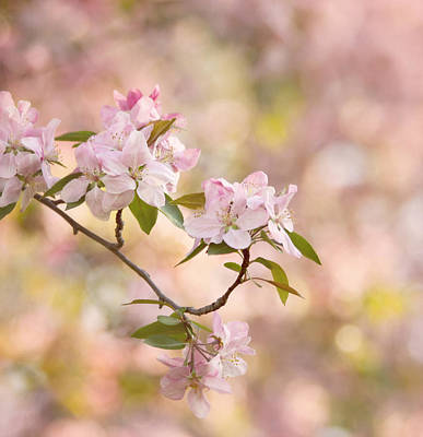 Pink Blossoms Art Print by Kim Hojnacki